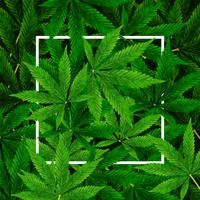 Marihuana of Cannabis Leaf-achtergrond
