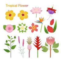 Tropische bloemenset vector