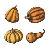 Set van hand getrokken pompoenen. Herfst. vector