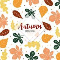 Mooie herfst kleurrijke bladeren achtergrond