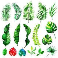 Aquarel zomerbladeren elementen collectie