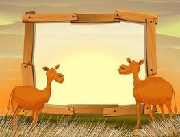 Frame-ontwerp met kamelen in het veld