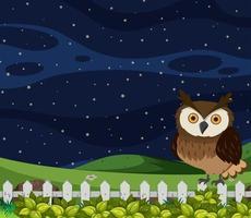 Uil bij nachtscène