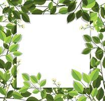 prachtige groene bladrand