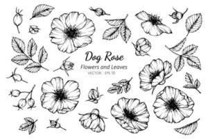 verzameling hond rose bloemen en bladeren vector