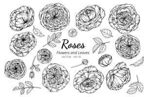 verzameling rozenbloesems en bladeren vector