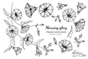 verzameling van morning glory bloemen en bladeren vector