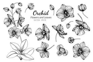 verzameling orchideebloemen en bladeren