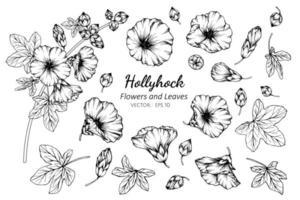 verzameling stokroos bloemen en bladeren