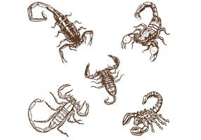 Handgetekende Scorpionsvectoren vector