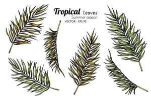 set van palmblad tekeningen vector