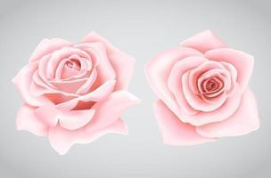roze rozenbloem vector