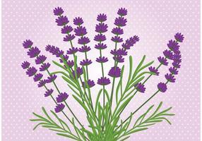 Lavendel Bloem Vector