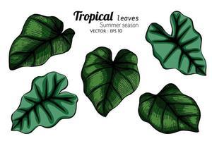 set van grote tropische bladeren vector