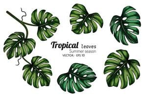 set van monstera tropische blad tekenen