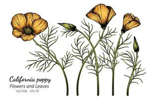 oranje california poppy bloem tekening vector