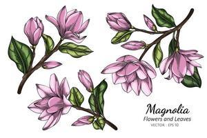 roze magnolia bloem en blad tekenen
