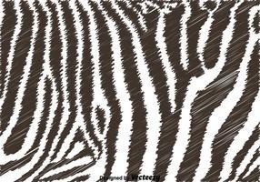 Zwart-witte Zebra Achtergrond vector