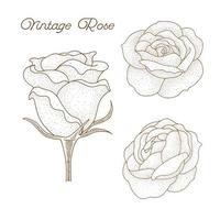 hand getekend vintage roos ontwerp vector
