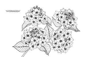 hand getrokken hortensia bloem- en bladontwerp vector