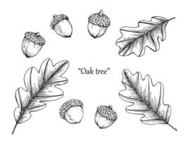 eikel en blad hand getekende set vector