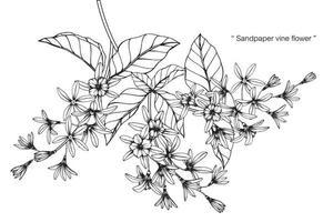 schuurpapier wijnstok bloem blad hand getekende set vector