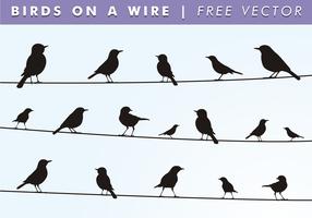 Vogels Op Een Draad Gratis Vector