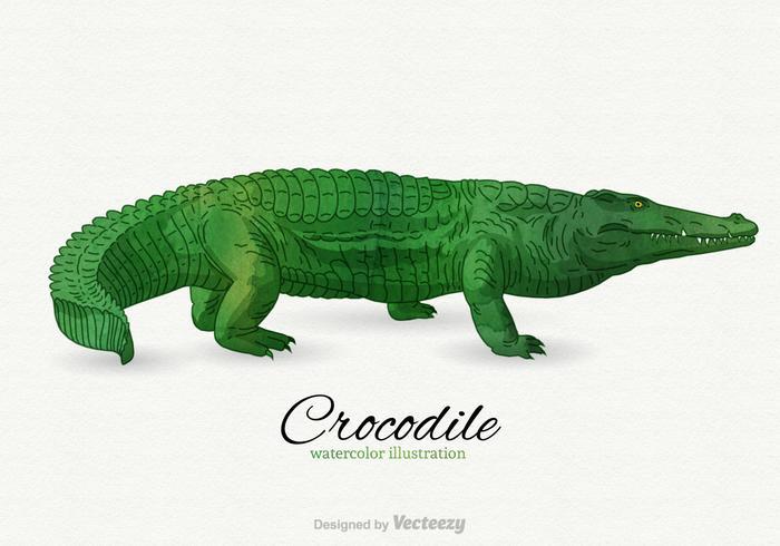 Kostenlose Krokodil Vektor-Illustration vektor