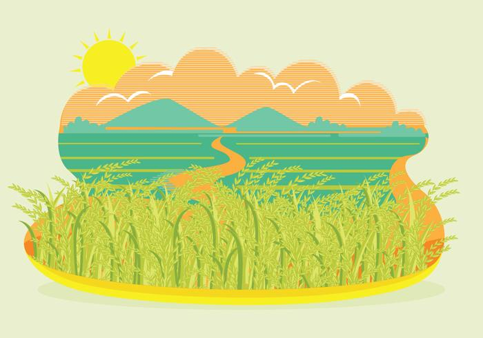 Ris fält landskap vektor