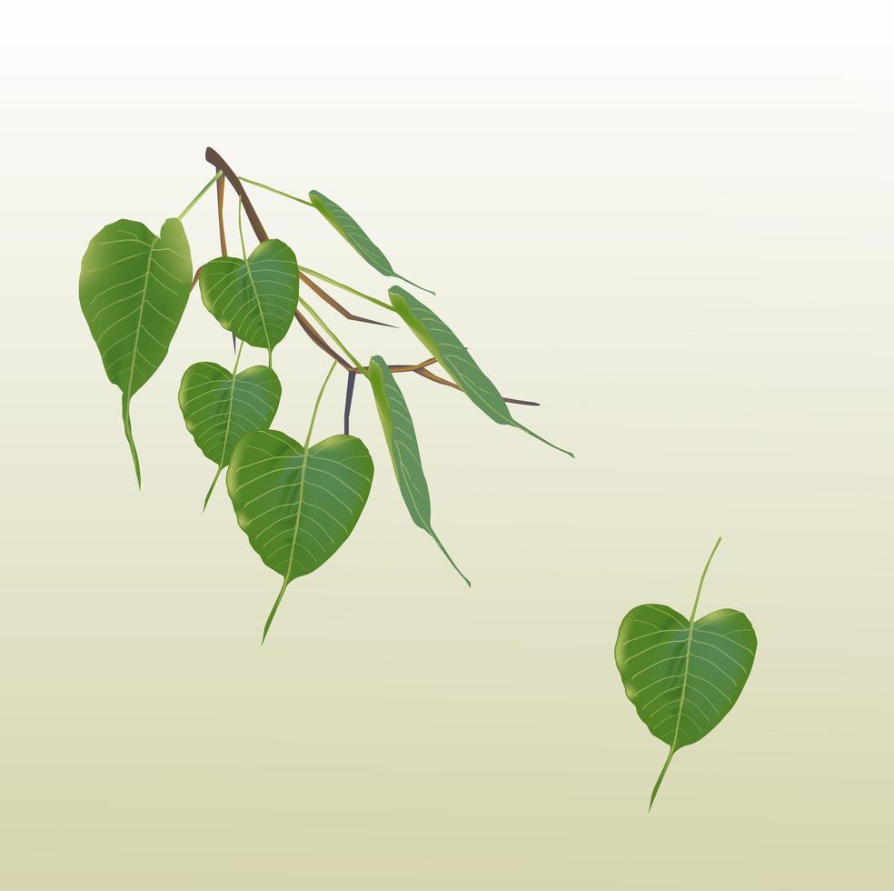 grüne Bodhi-Blätter vektor