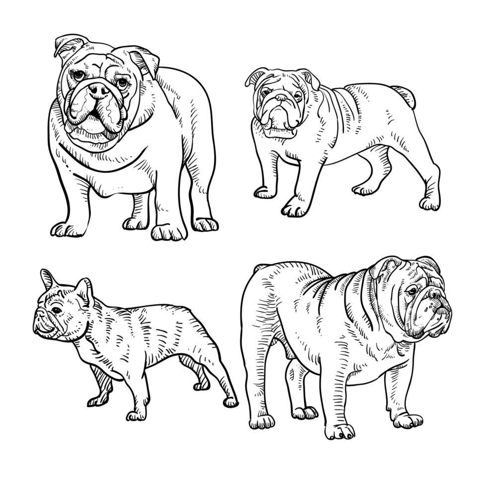 Satz Bulldogge Strichzeichnungen vektor