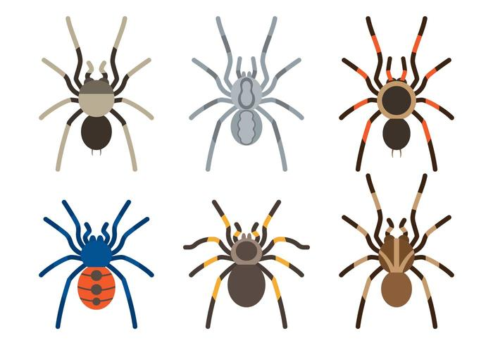 Tarantula-Arten vektor