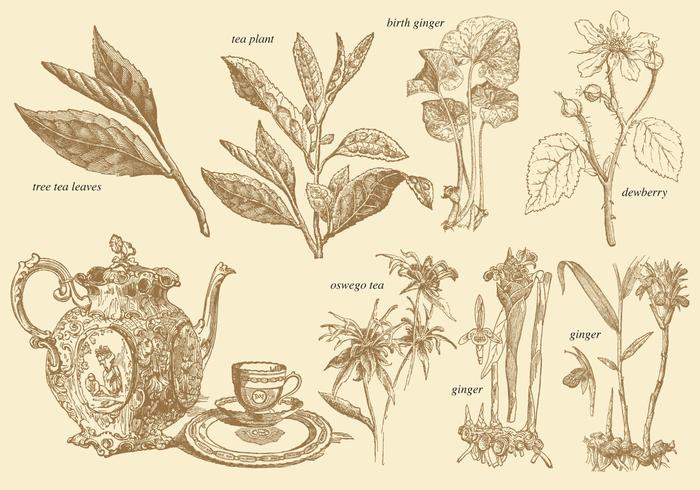 Old Style Tee Pflanzen vektor