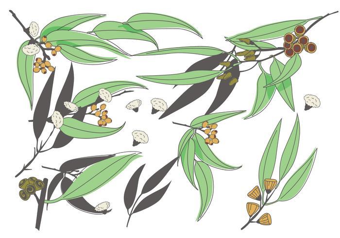 Eukalyptusvektor vektor
