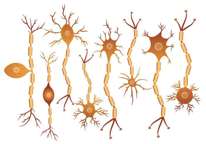 Neuronuppsättning vektor
