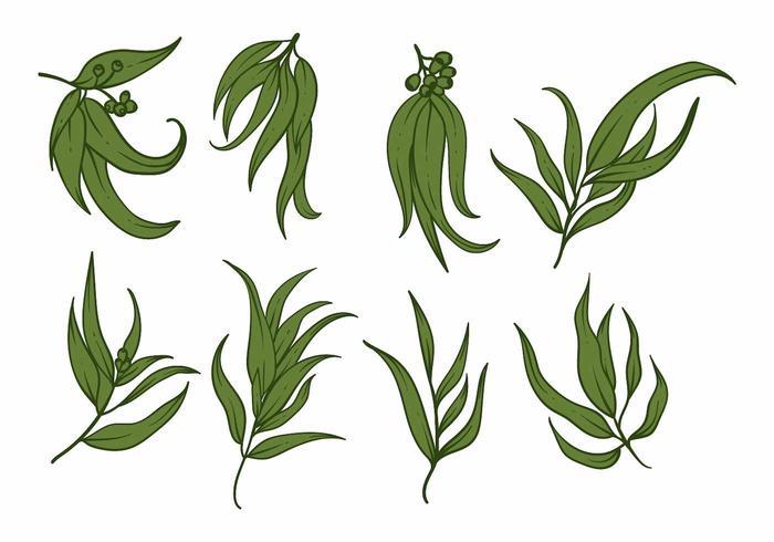 Eukalyptus ikonuppsättning vektor