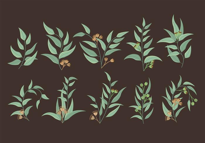 Eucalyptus ikoner vektor
