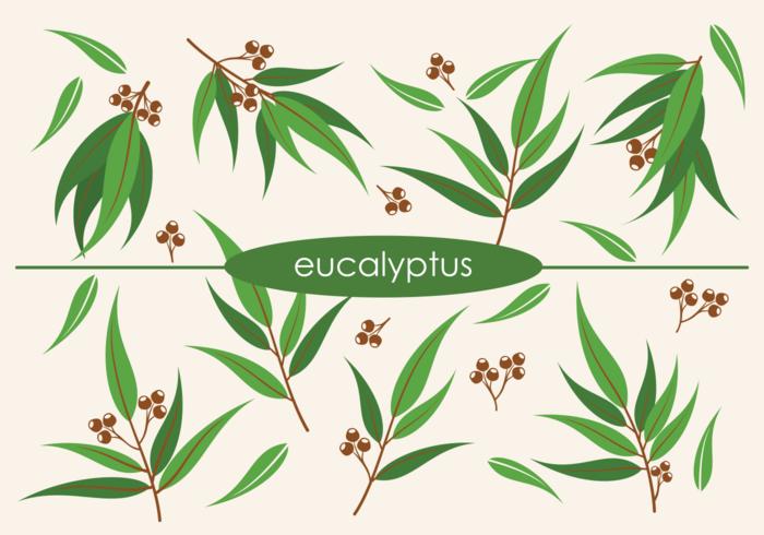 Vektor eukalyptus