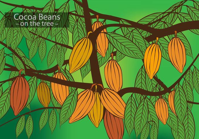 Kakao Bönor På Trädvektorn vektor