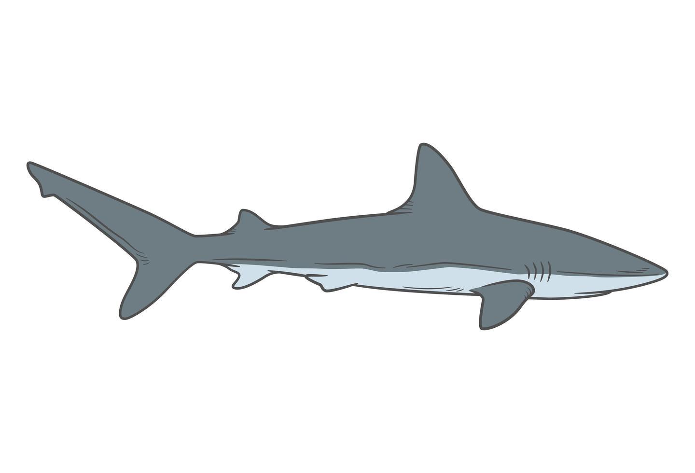 hajteckning isolerad på vit vektor
