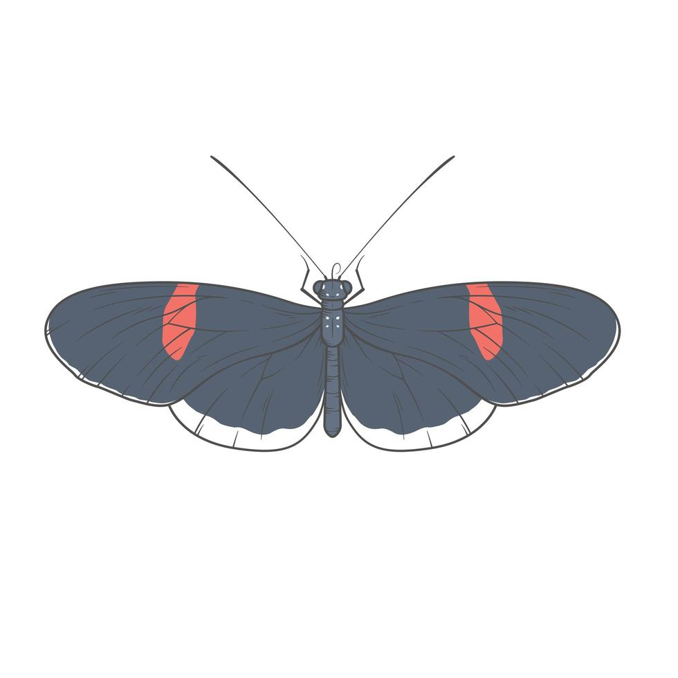 illustration ritning av fjäril vektor