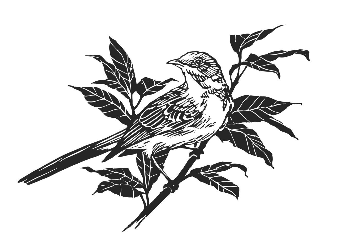 Vogel auf Zweigin Gravur Linolschnitt Stil vektor