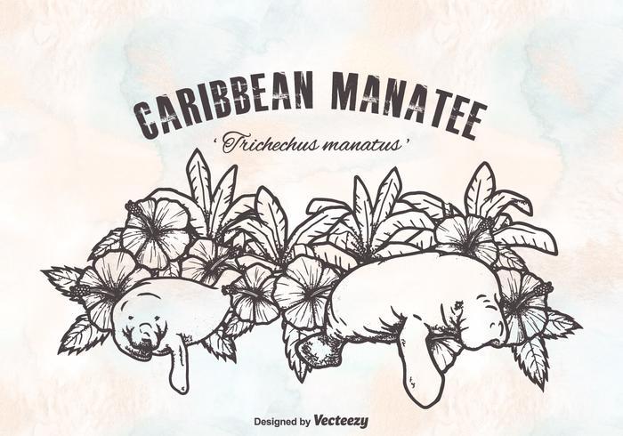 Gratis Caribbean Manatees Vector Design