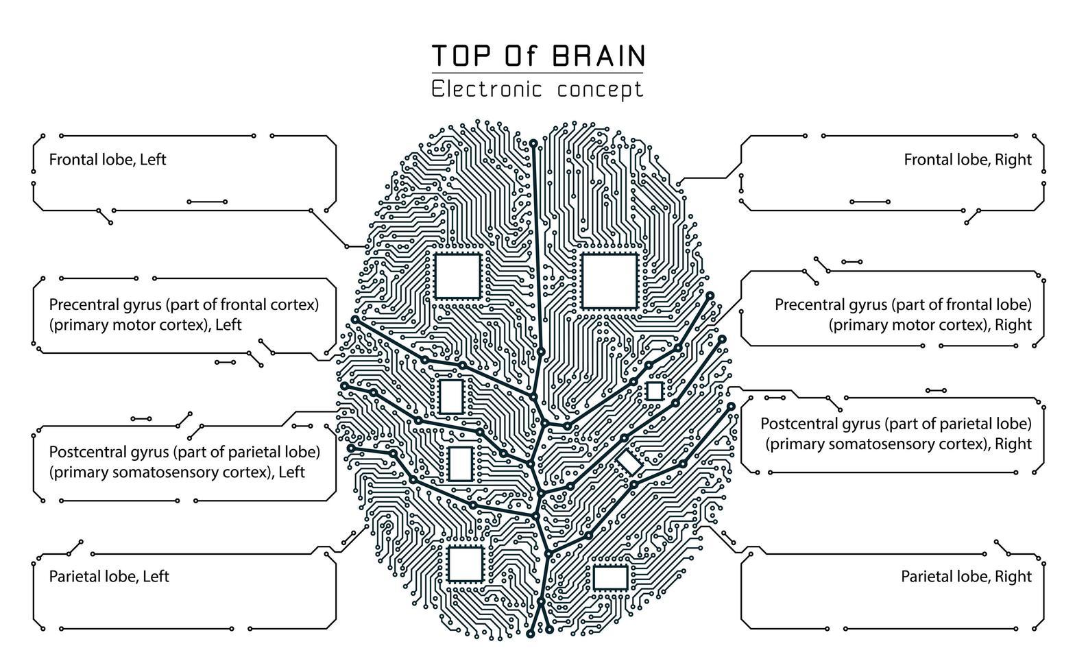 Gehirn-Infografik im Schwarz-Weiß-Technologie-Stil vektor