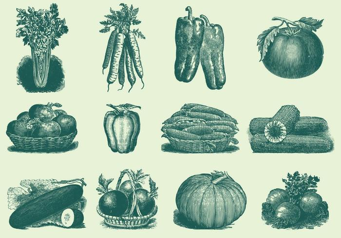 Vintagegrönsaker vektor