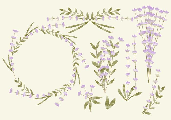 Vektor Aquarell Lavendel