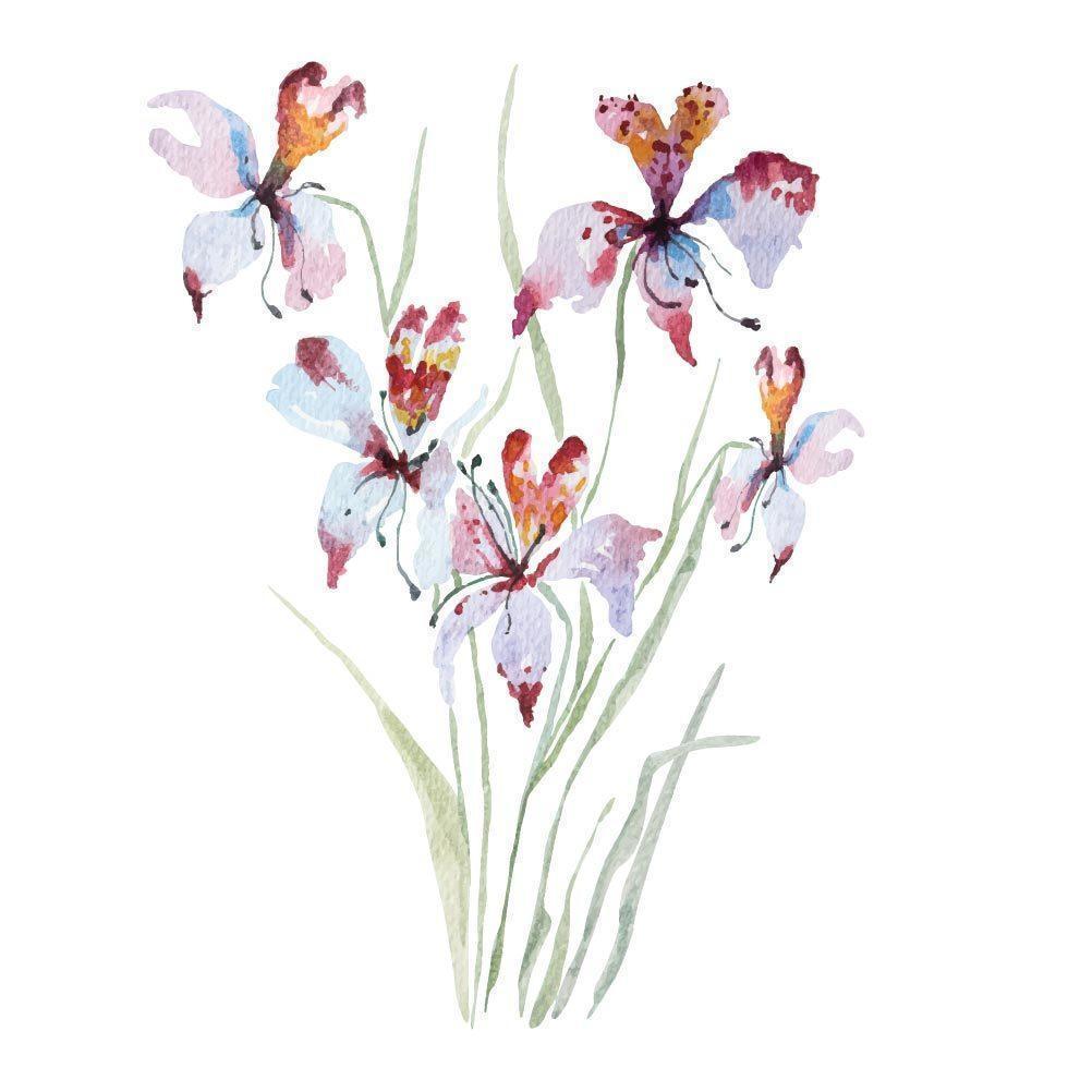 målning av orkidéer med akvarell vektor