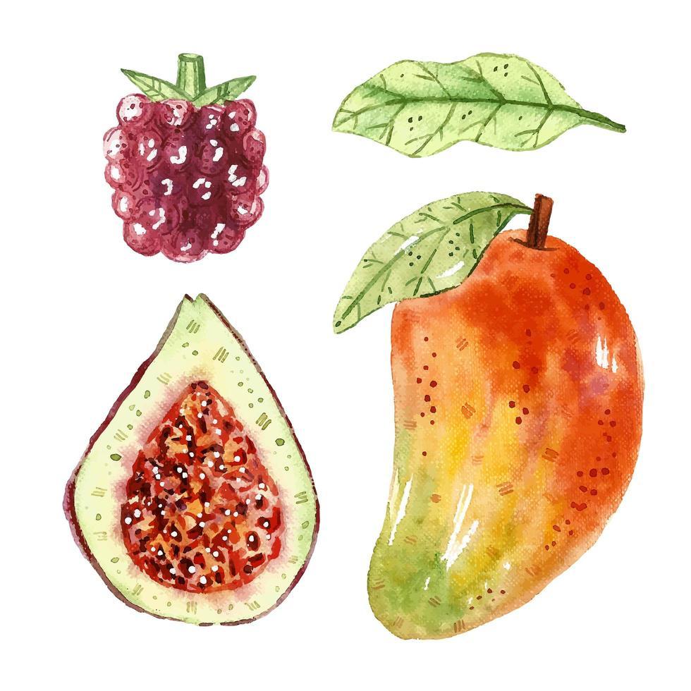 Mango, Feige, Beere, Blatt Aquarell Set vektor