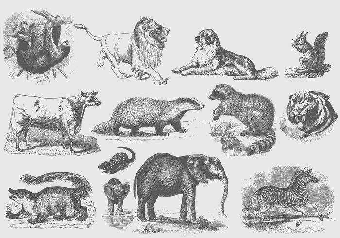 Graue Säugetier-Illustrationen vektor