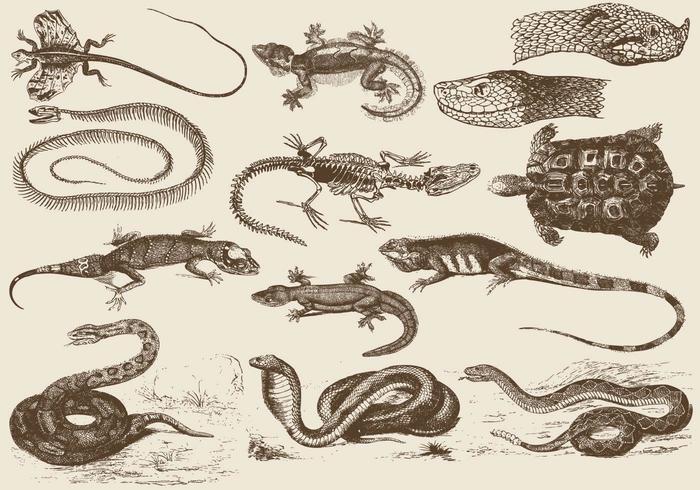 Reptilien Illustrationen vektor